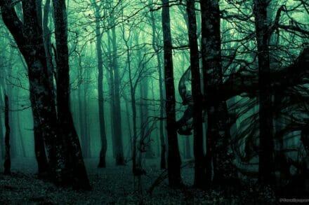 1. ábra a szabadulószoba Láthatatlan erdő Budapest
